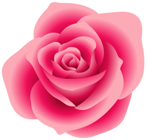 pink rose compressed